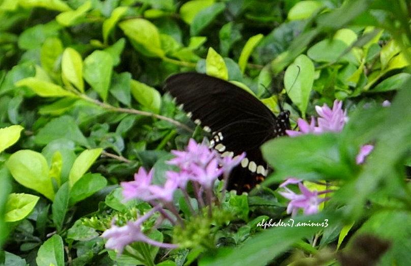Butterfly :)))