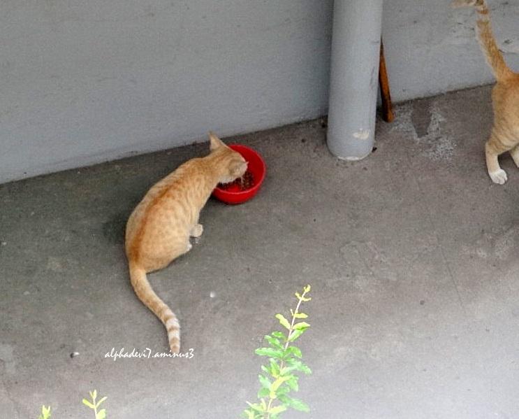 Light brown cats....1