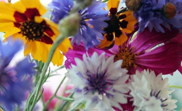 le chant fleuri des abeilles