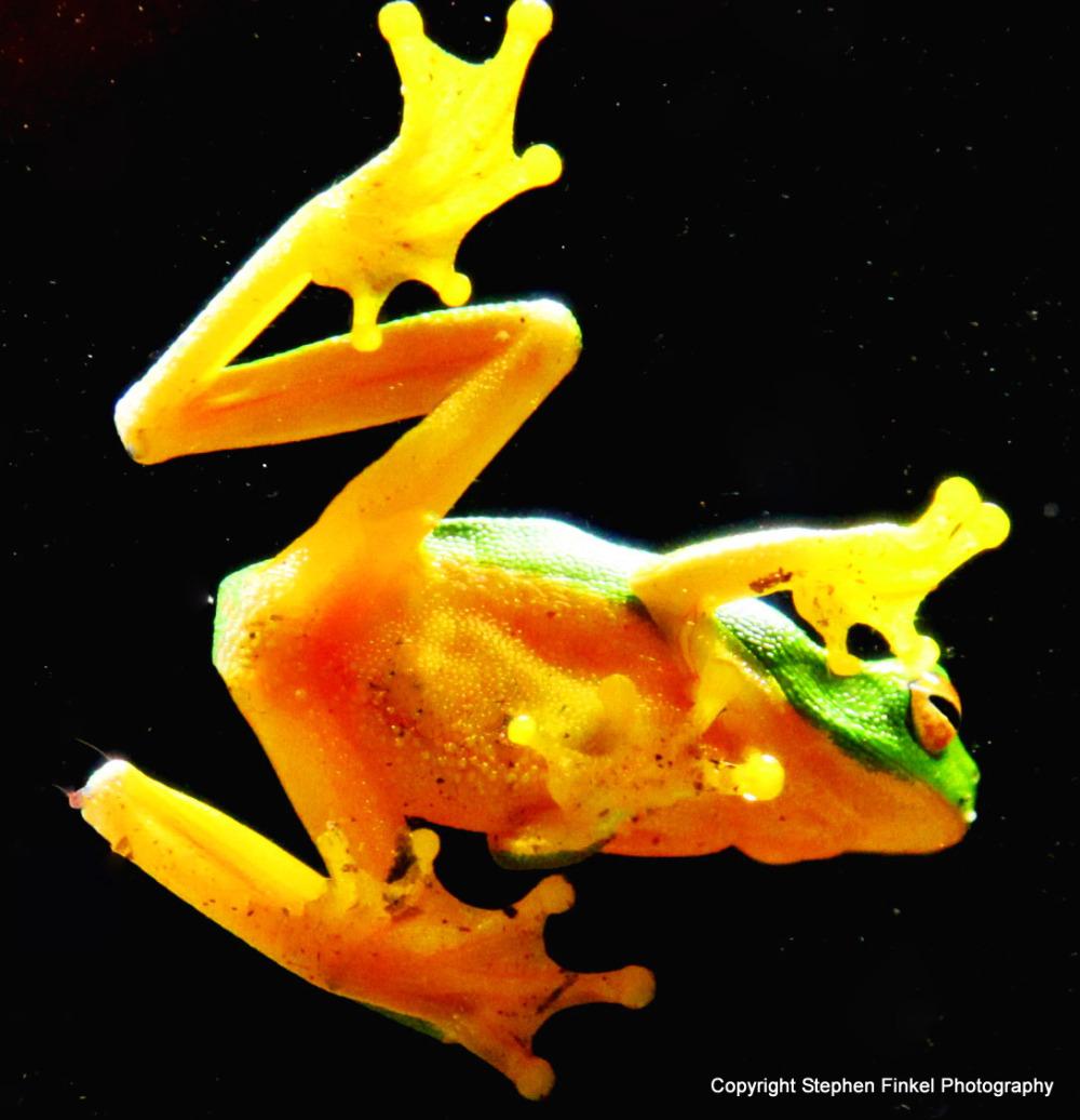 Frog through Glass