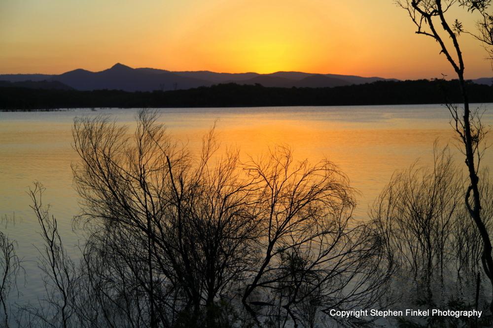 Sunset Thorough the Bushes
