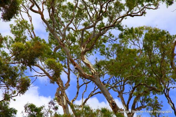 Aussie Bushland