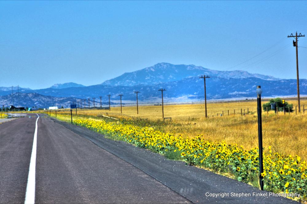Yellow Flower Road