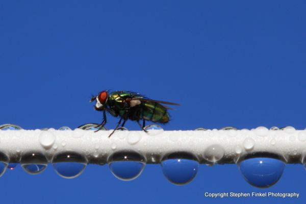 Fly on a Wire