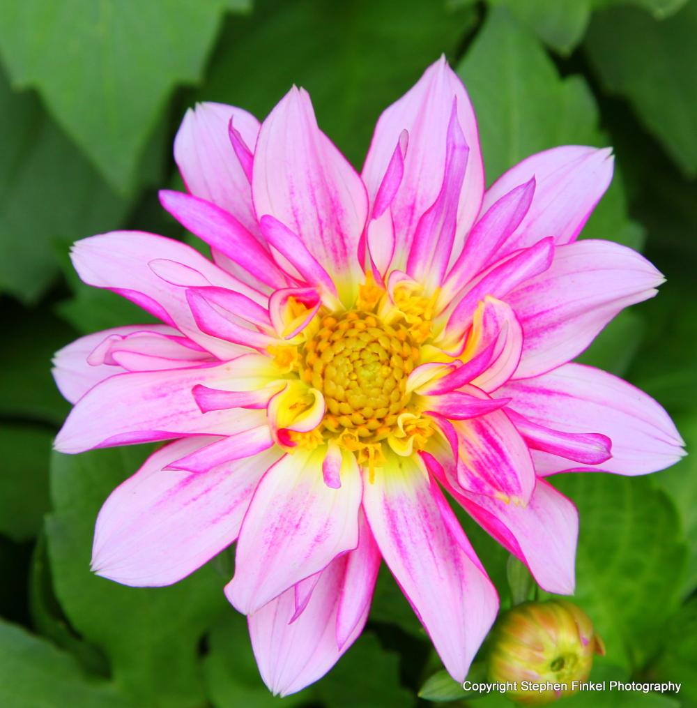 Pretty when Pink