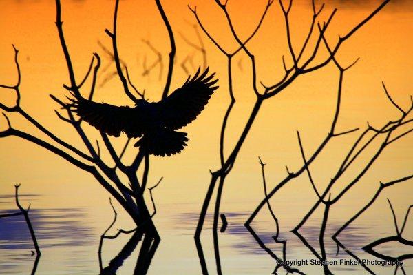 Bird and Golden Light