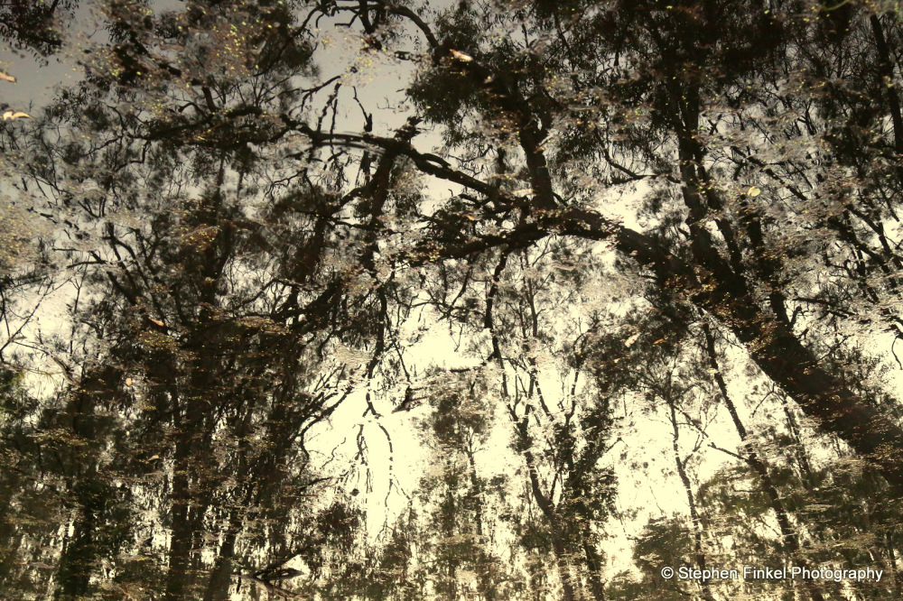 Reflections from the Forest