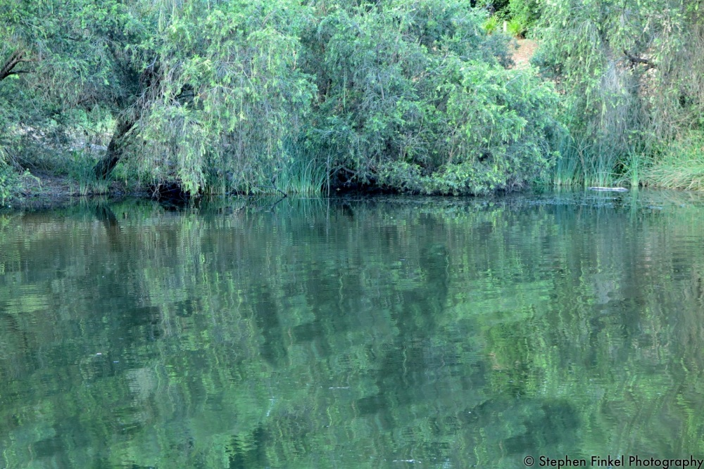 Green Reflections