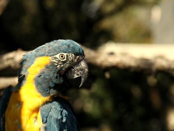 Zoo Parrot