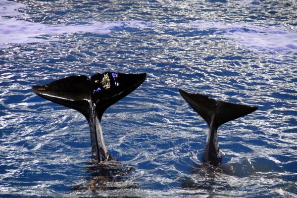Killer Whales in San Antonio