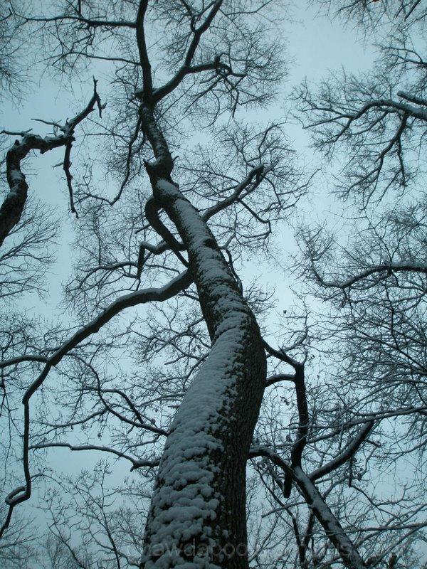 Winter_beauty