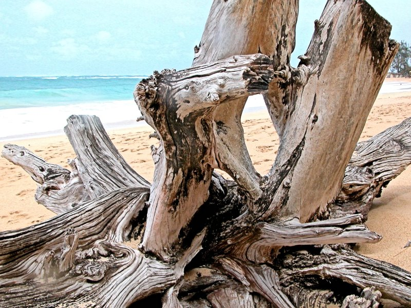 Interesting driftwood on beach in Maui Hawaii