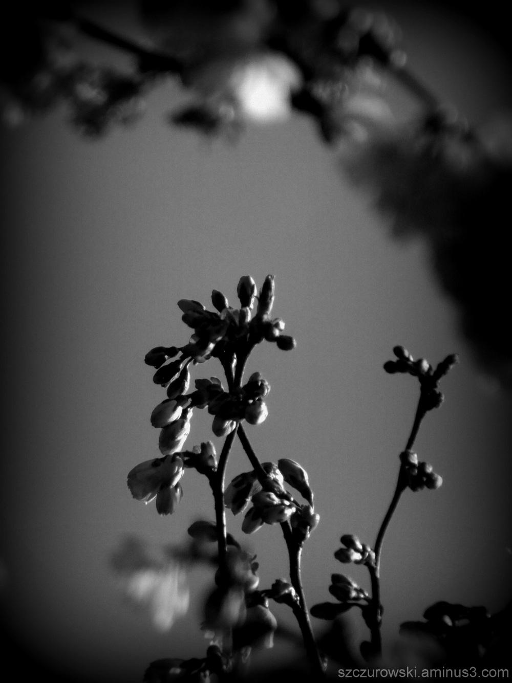 Beautiful Blossom 2013