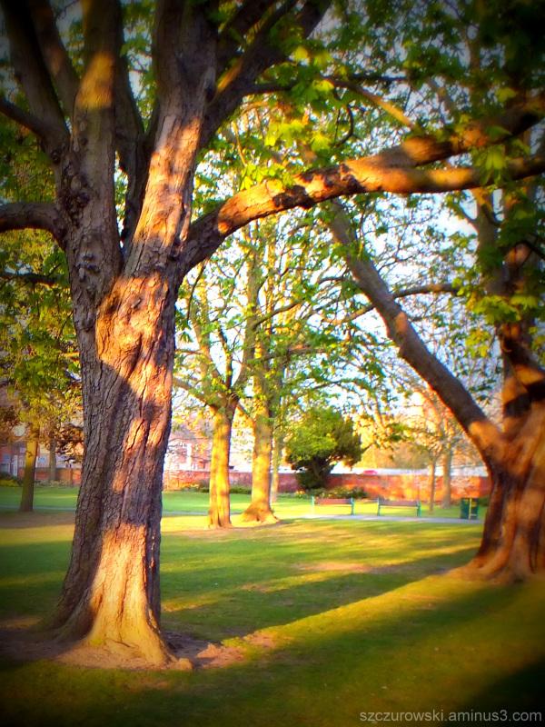 Queens Park Loughborough