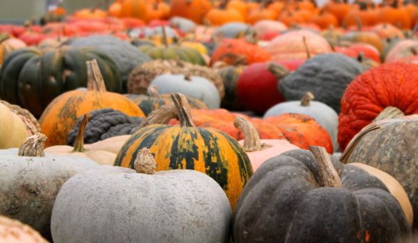 Various pumpkins  from all over the world
