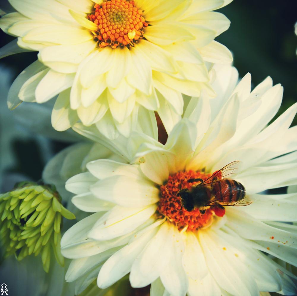 hi Bee