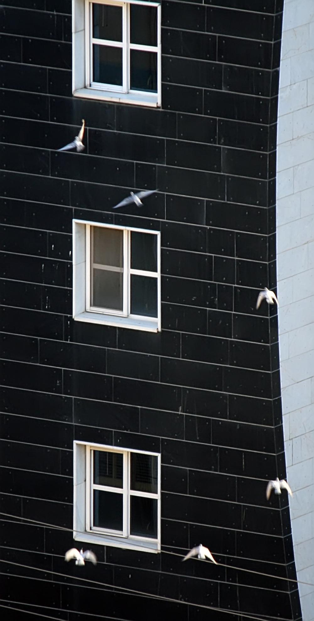 Mass movement of pigeons