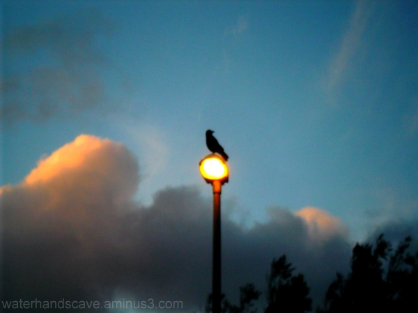 The bird, the cloud and the lamp