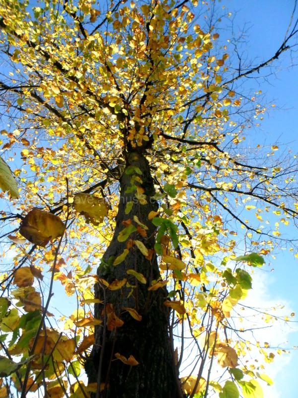 Imposing trees I