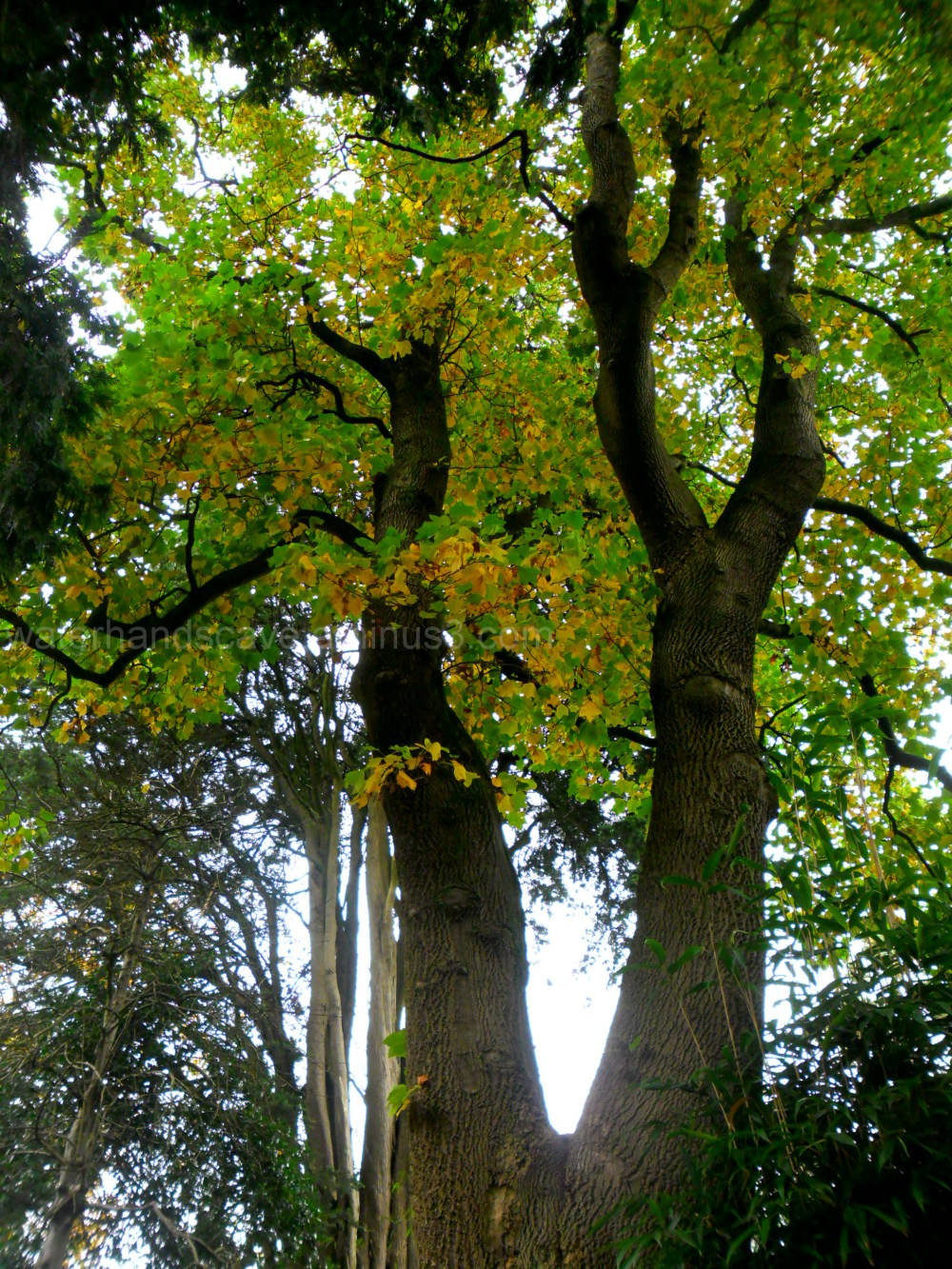 Imposing trees IV
