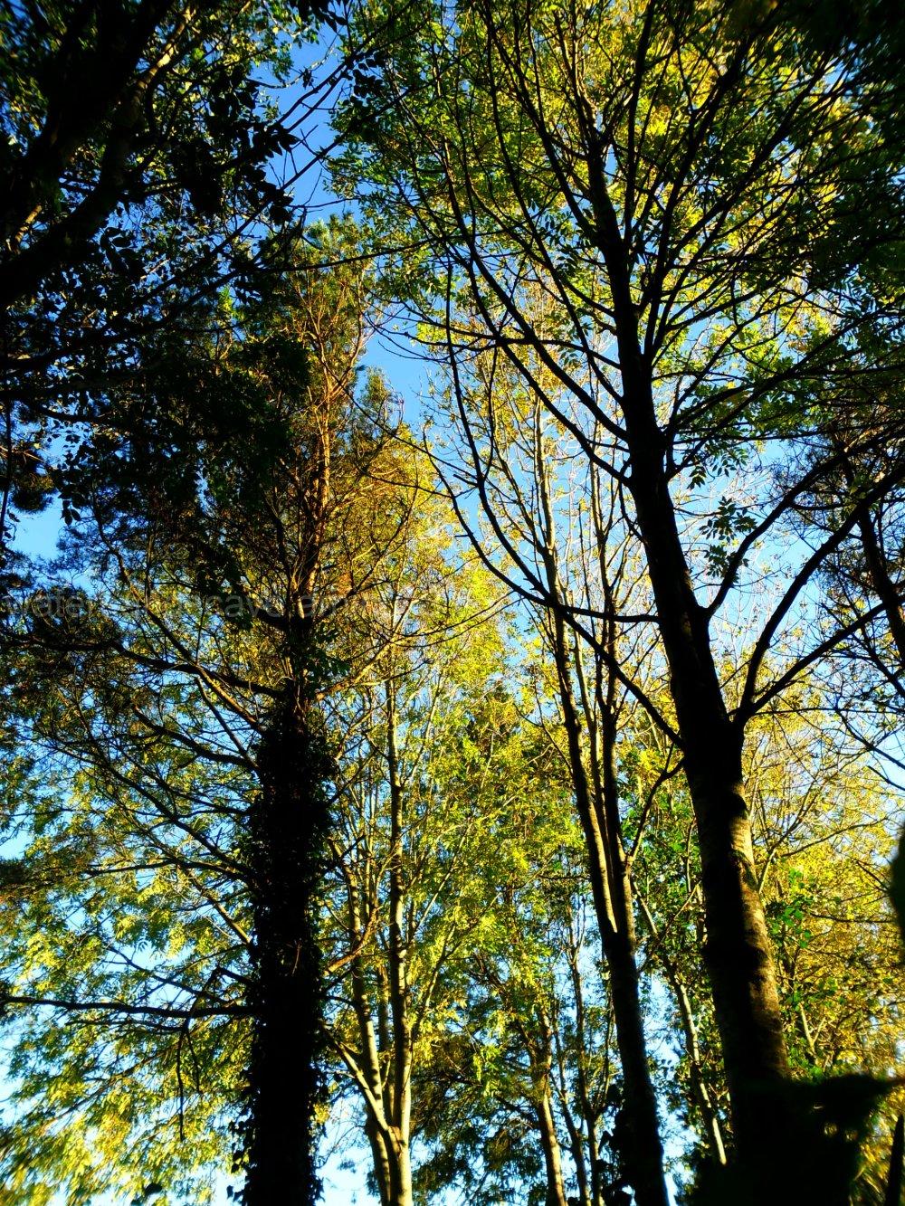 Imposing trees VII