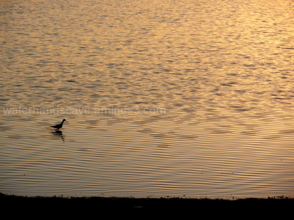 Lonely bird at the sunset