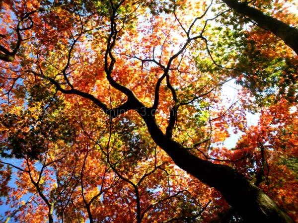 Imposing trees VIII