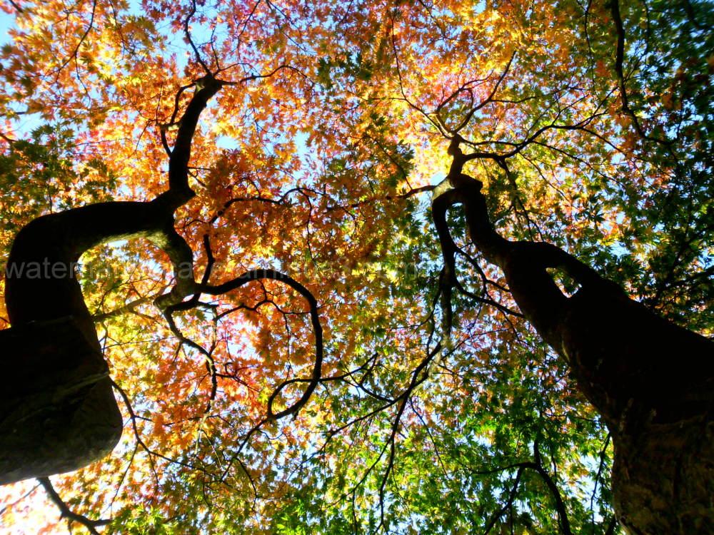 Imposing trees X