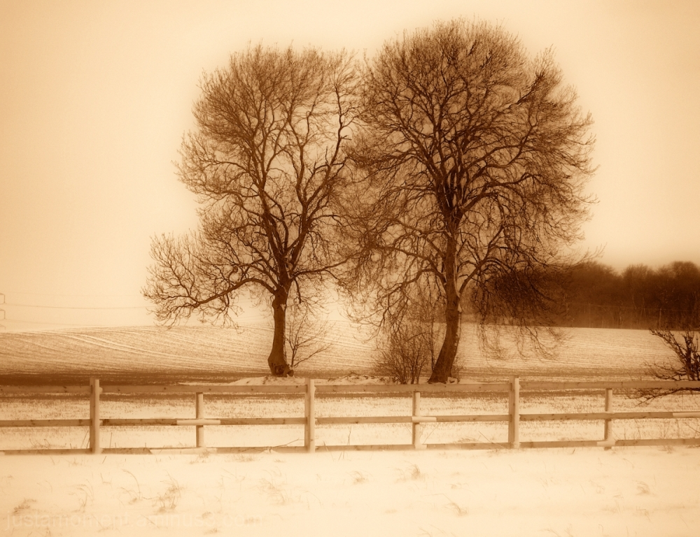 Trees in sepia