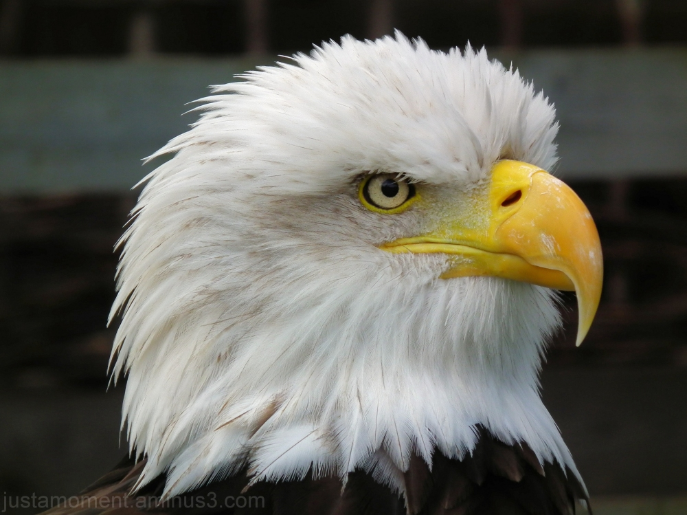 steller sea eagle warwick castle