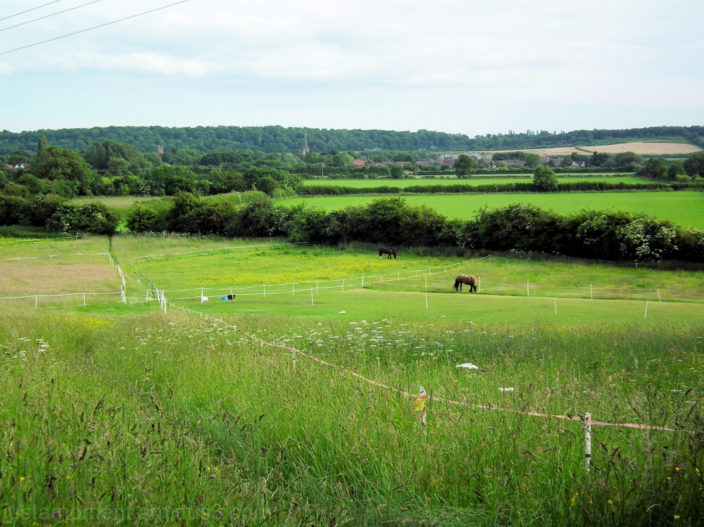Zoe's field.