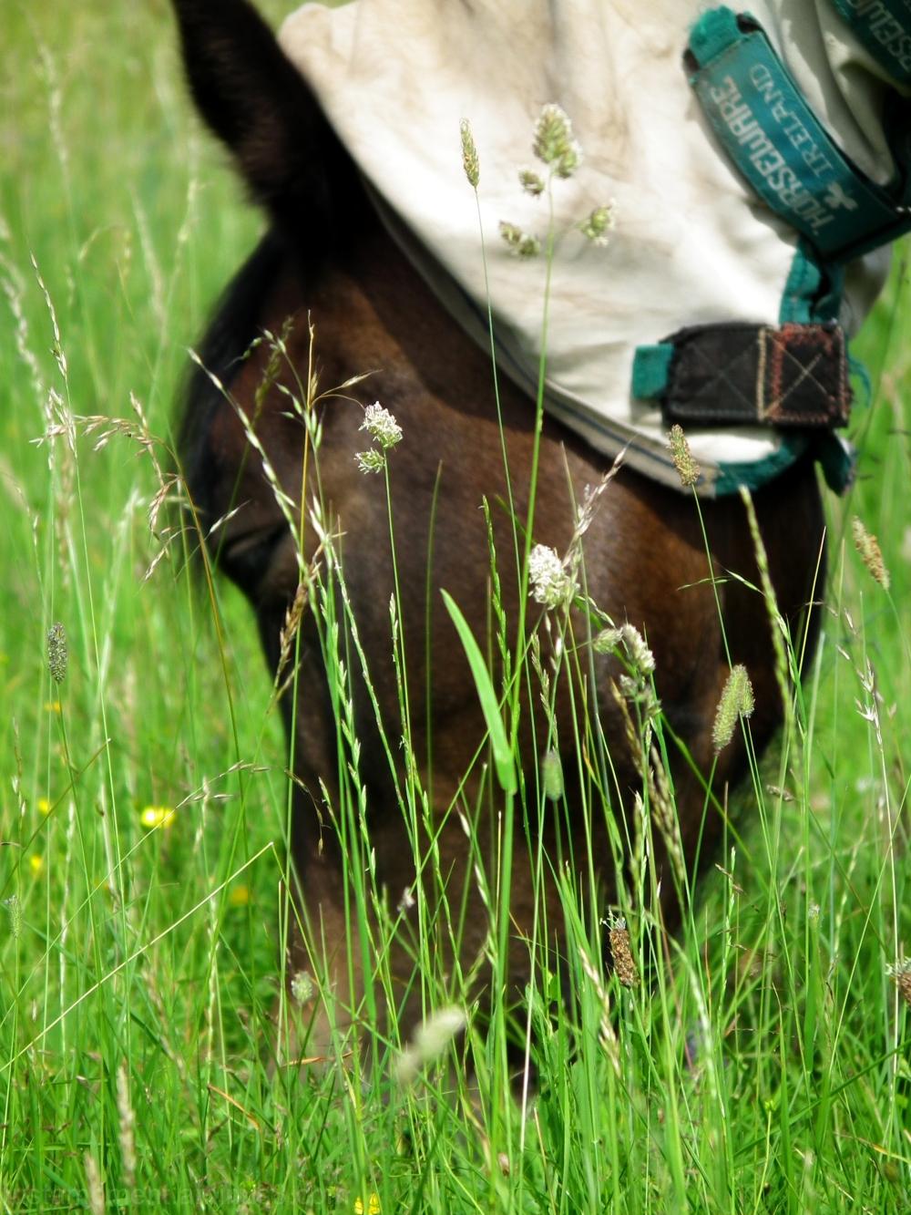 Horse grass.