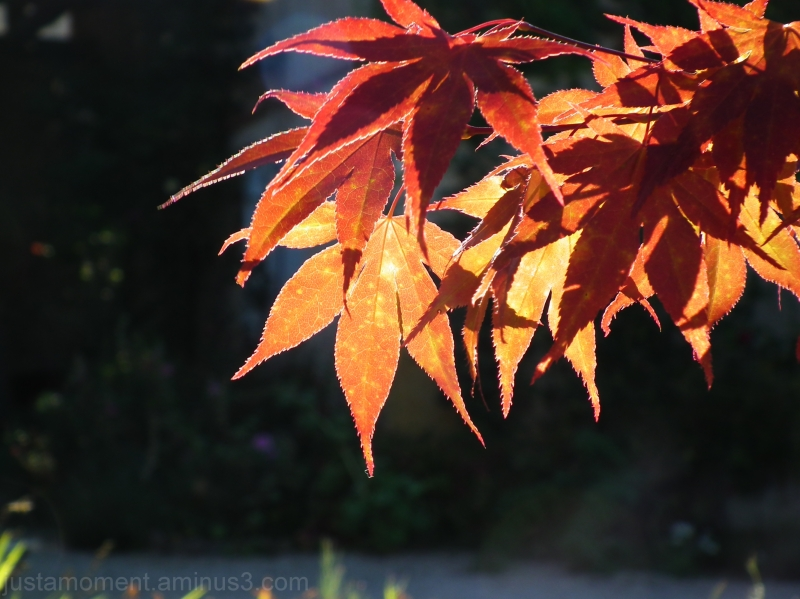 Flaming leaves.