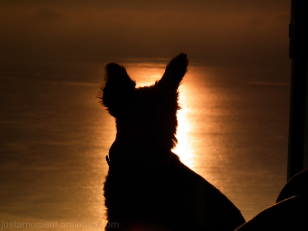 Sun Dog Silhouette
