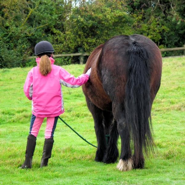 pony tailes
