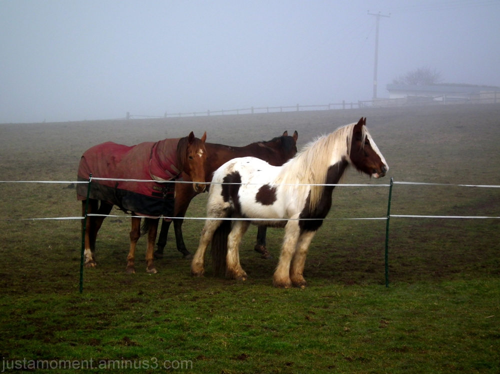 Horses in the mist.