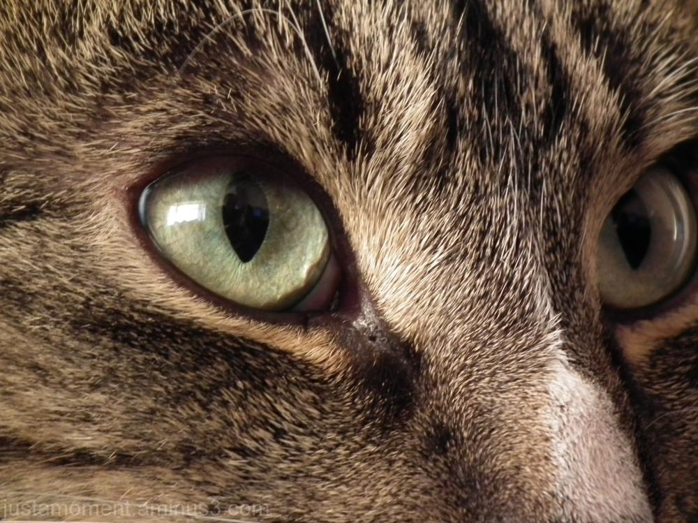 Cats eyes.