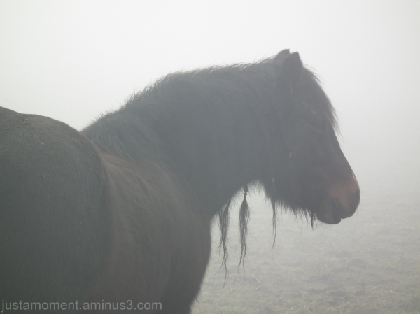 fog horse