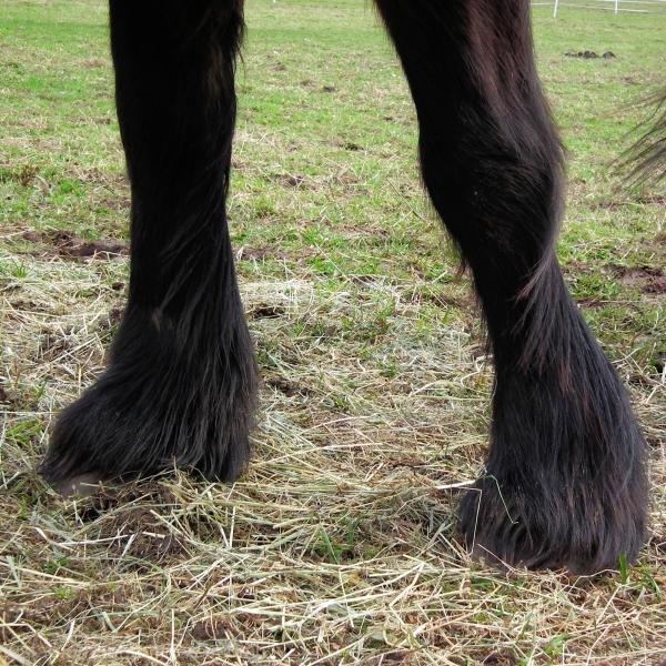 Hairy Legs.