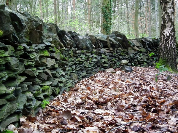 drystone wall swithland wood