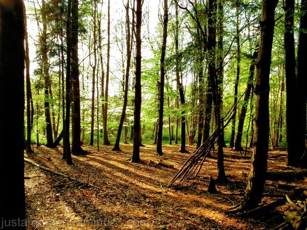 beacon hill trees