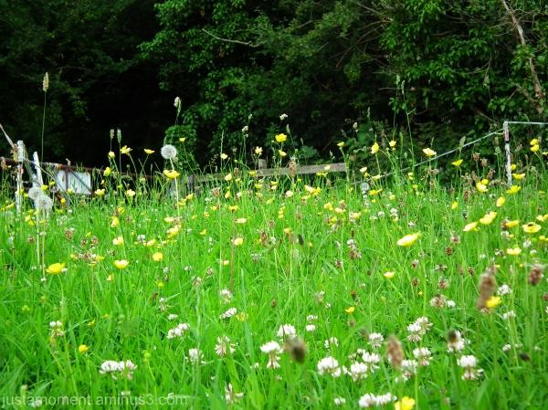 Flowering Meadow.