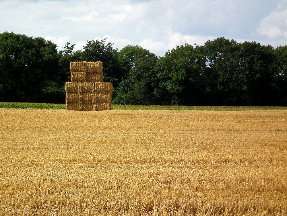 Bales of straw in the Vale of Belvoir.
