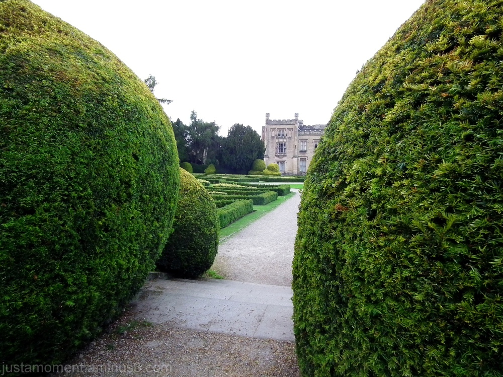 Close to the hedge.