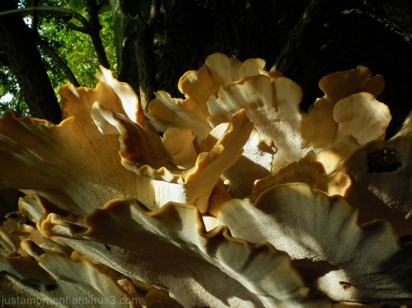 Fungi.