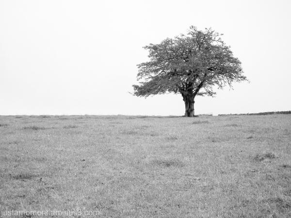 monotone black and white tree