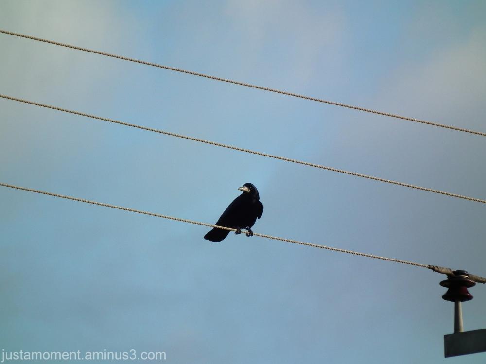 Bird on a wire.