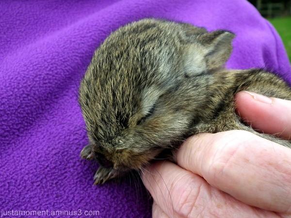 baby rabbit bunny