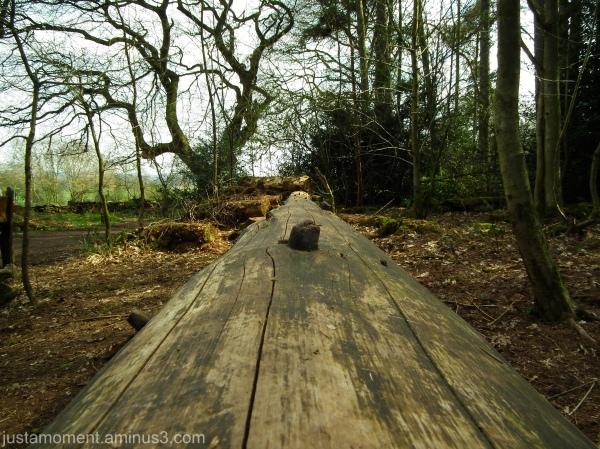 Long Log.