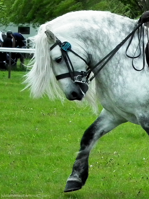 horse stallion